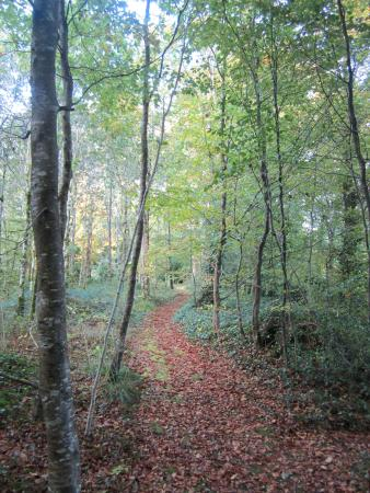 Riverstown, İrlanda: Many walks in the woods on the 500 acre grounds