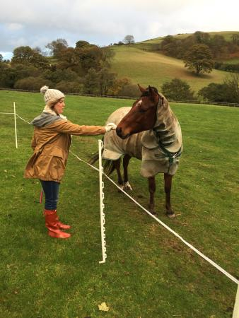 Tremeirchion, UK: one of the horses came to say hello!!