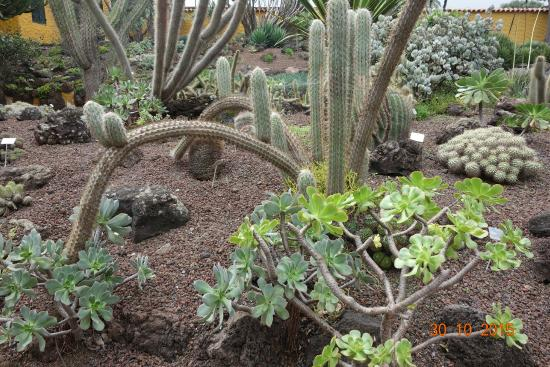 Jardin de Cactus - Picture of Jardin Canario, Las Palmas de Gran Canaria - Tr...