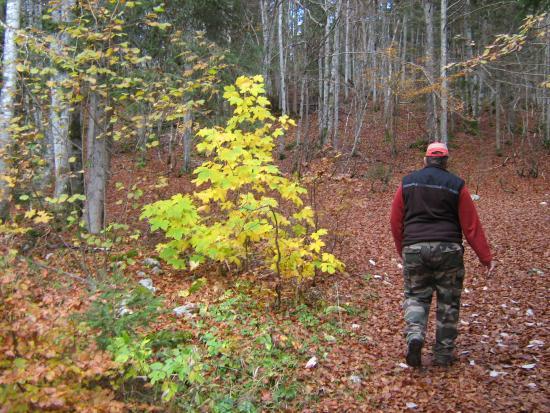 Hotel de la Haute Montagne: L'automne lajoux 2015