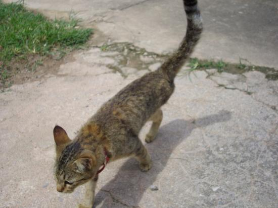 adoptez moi - Foto di Lanta Animal Welfare, Ko Lanta ...