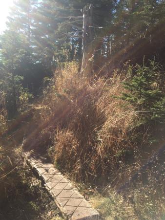 Cutler Hike