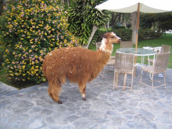 Gartendekoration - Picture Of Hotel Majoro, Nazca - Tripadvisor