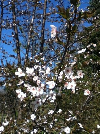 The Botanical Garden (Gradina Botanica) : trees in bloom