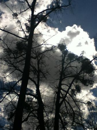 The Botanical Garden (Gradina Botanica) : clouds