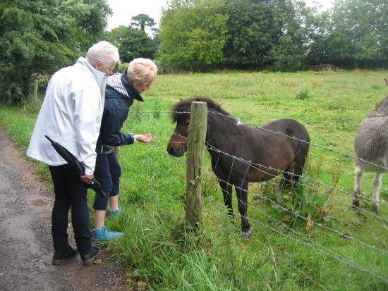 Drogheda, Irland: Donkey