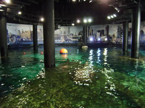 Central piscine picture of istanbul akvaryum istanbul tripadvisor - Piscine istanbul ...
