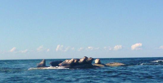 Seals of Cape John