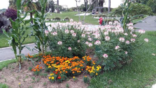 Parque Centenário Municipal Erni Carlos Heller