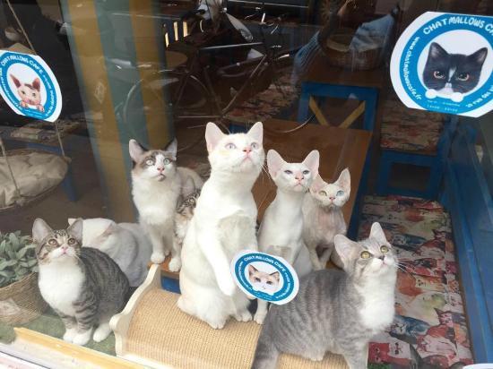 un lieu d di aux chats o vous n tes que l 39 invit chat mallows cafe p rizs f nyk pe. Black Bedroom Furniture Sets. Home Design Ideas