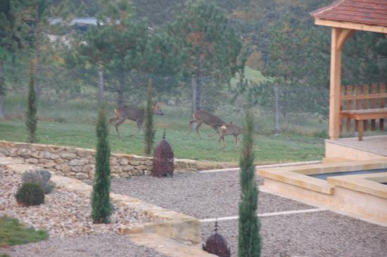 Mauzac-et-Grand-Castang, Francja: Le matin au petit déjeuner, réveil en beauté