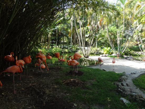 Flamingo Gardens photo by Ricky Hanson