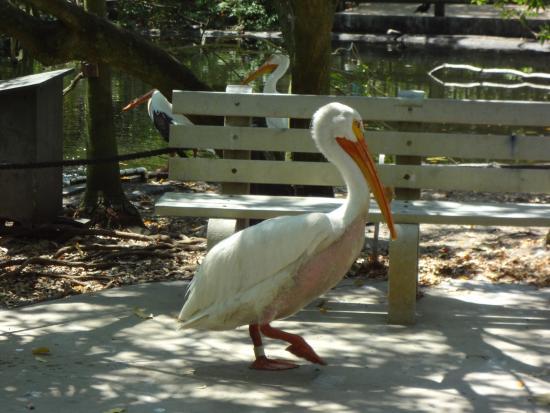 Flamingo Gardens by Ricky Hanson