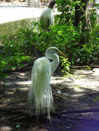 Flamingo Gardens photo by RickyHanson