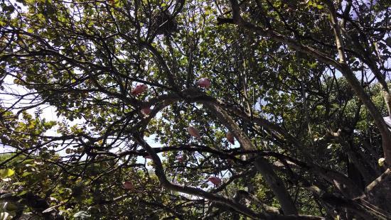at Flamingo Gardens Ricky Hanson