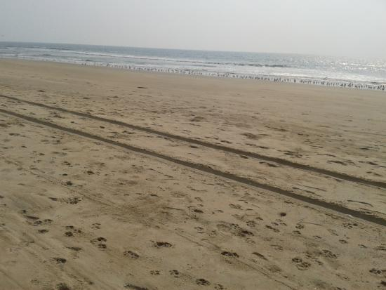 Cansaulim Beach: Lifeguard jeep tracks in sand and birds by the shoreline