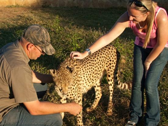 The Kingdom Resort: Visit the Predator Park nearby and get up close and personal with some animals