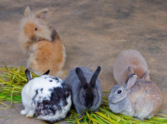 Satsukiyama Zoo: rabbits