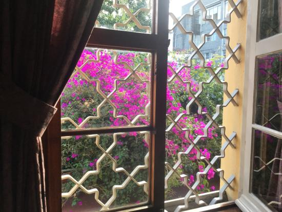 Casa Carmel: Bougainville bush outside