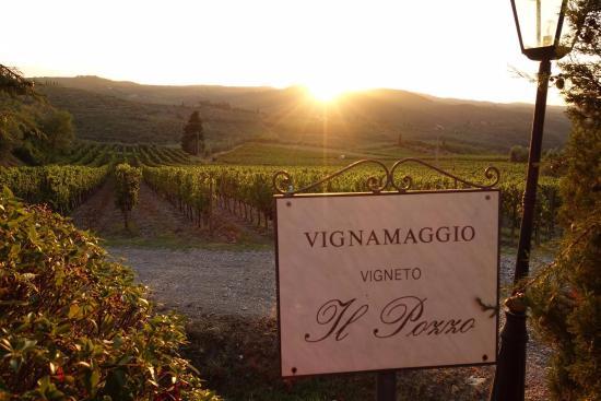 Vignamaggio: Виноградник