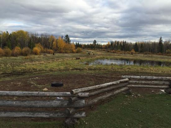 """Cariboo, Kanada: Aussicht vom Garten auf die """"Weide"""""""