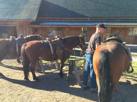 Cariboo, Canadá: Satteln der Pferde
