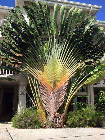 Sunset Cove: Condo greenery