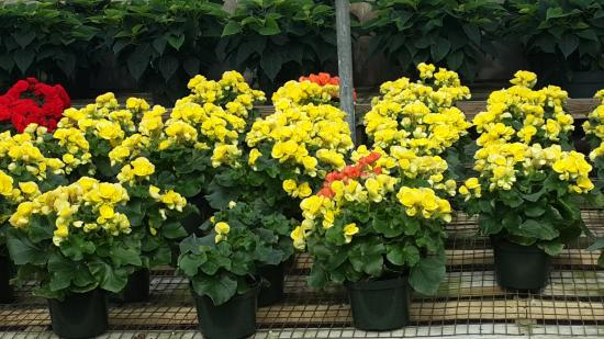 Variety Growers: lovely potted plants