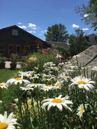 Forestburgh, NY: Daisies and the Patio!