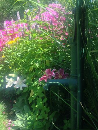 Forestburgh, estado de Nueva York: More flowers!