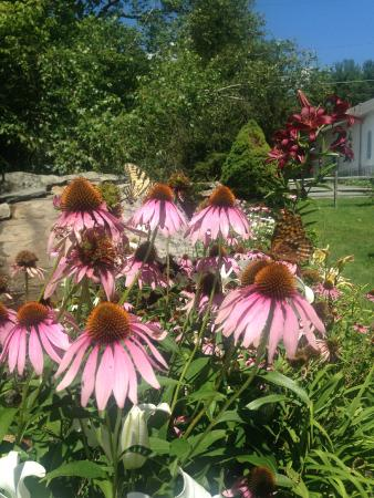 Forestburgh, estado de Nueva York: Flowers!