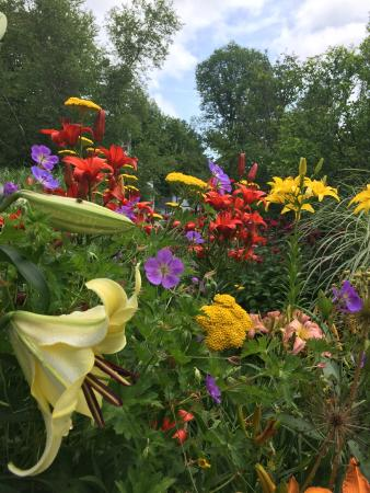 Forestburgh, Nowy Jork: Lilies Galore!