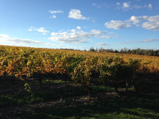 La guía del amante del vino al Canadá atlántico lee entre las vides | Guía del vino de otoño | Halifax, Nueva Escocia | LA COSTA
