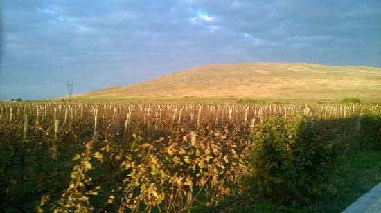 Pazardzhik, Bulgaria: The vineyard
