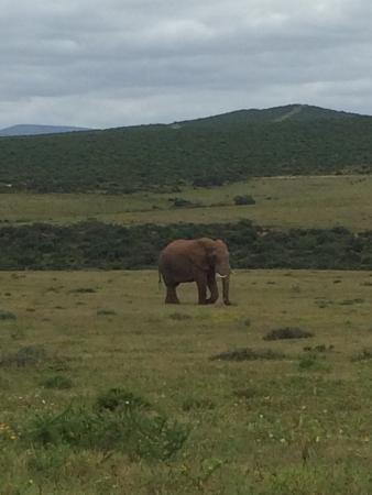 Аддо, Южная Африка: Wild Dreams Africa