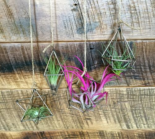 Berryville, VA: Geometric ornaments with airplants