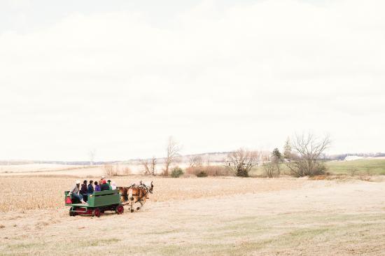 Pinehaven Bed and Breakfast: Horseride
