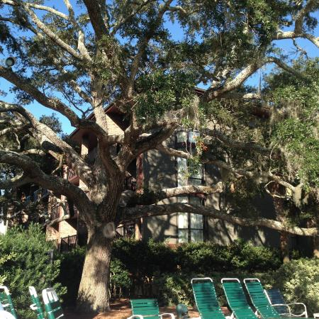 Gorgeous Old Trees Cover The Hotel Grounds Picture Of The Grand Hotel Golf Resort Spa Autograph Collection Point Clear Tripadvisor