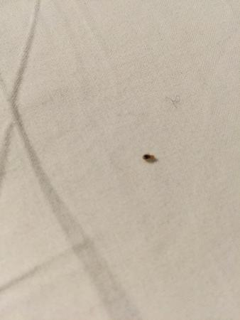 ‪‪Damrak Inn Hotel Amsterdam‬: Bed bugs on the pillows‬