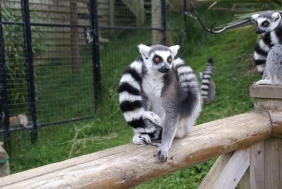 https://media-cdn.tripadvisor.com/media/photo-s/09/7c/06/b2/walking-with-the-lemurs.jpg