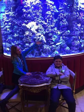 The Kimberly Hotel Amazing Fish Tank In Lobby