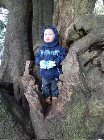Normanby Hall Country Park: even trees can be fun