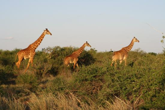 Safari Kenya Watamu - Day Tours