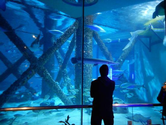 20151124 121850 Picture Of Audubon Aquarium Of