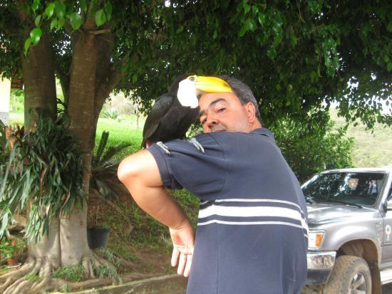 Rio Preto: tucanos