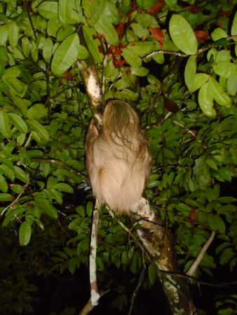 Llaquipallay Lodge and Expeditions : SLOTH