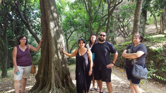 """Sant'Agnello, อิตาลี: Standing beside a """"300"""" year old tree (If I remember right)"""