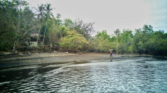 Mamaling Resort Bunaken: The beach in the middle of the mangrove