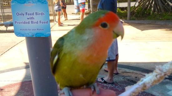 Feed me my friends picture of sea life park hawaii for Waimanalo feed