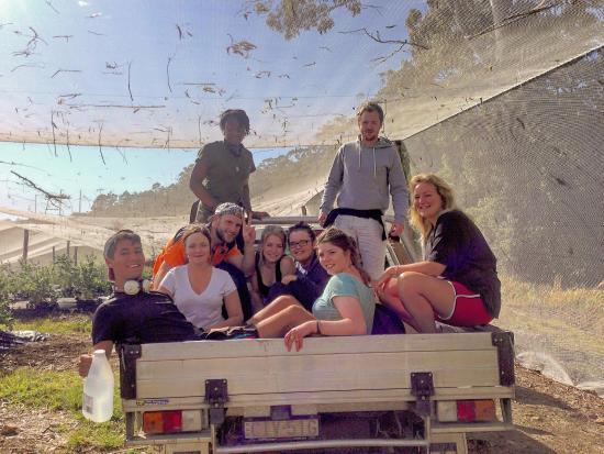 Hoey Moey Backpackers: Farm work